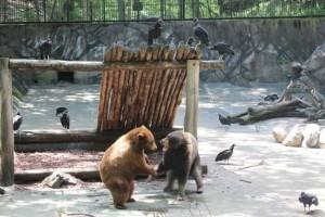Bear Mountain Zoo bears