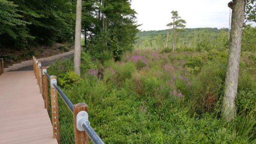 Stewart State Forest Boardwalk Trail